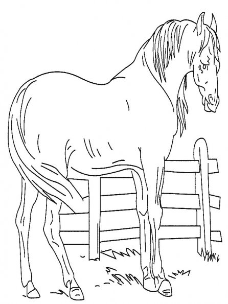 coloriage-cheval-4
