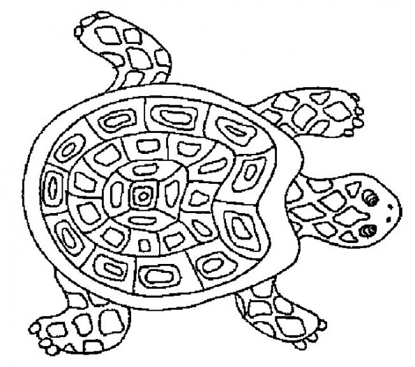 coloriage-tortue