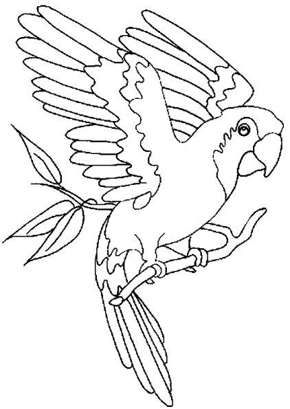 Coloriages d 39 animaux pour enfants - Modele d oiseaux a dessiner ...