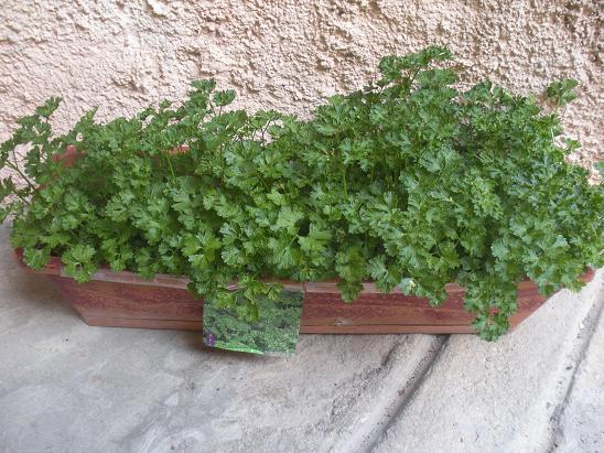 faire pousser des herbes aromatiques sur balcon. Black Bedroom Furniture Sets. Home Design Ideas
