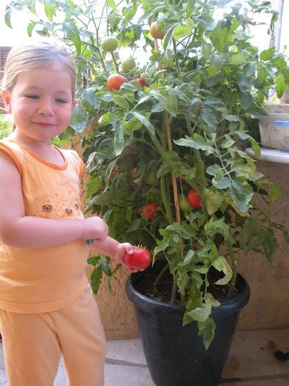 Comment faire pousser des tomates grappe sur balcon - Faire pousser des courgettes verticalement ...