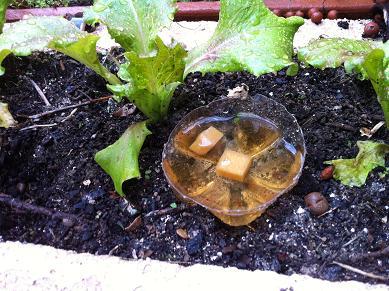 Pi ge limaces cologique - Que faire avec du marc de cafe dans le jardin ...
